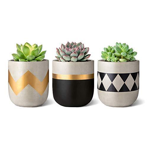 Mkouo 7.6cm Cemento Planta suculenta Set of 3 Macetas de hormigón Modern Flower Pots Indoor for...