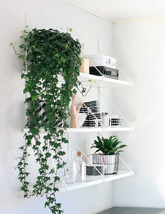 Planta de interior colgante en maceta en estantería