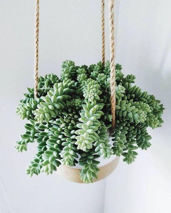 Planta de interior colgante en maceta colgada de cuerda