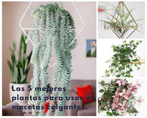 Las 5 mejores plantas colgantes