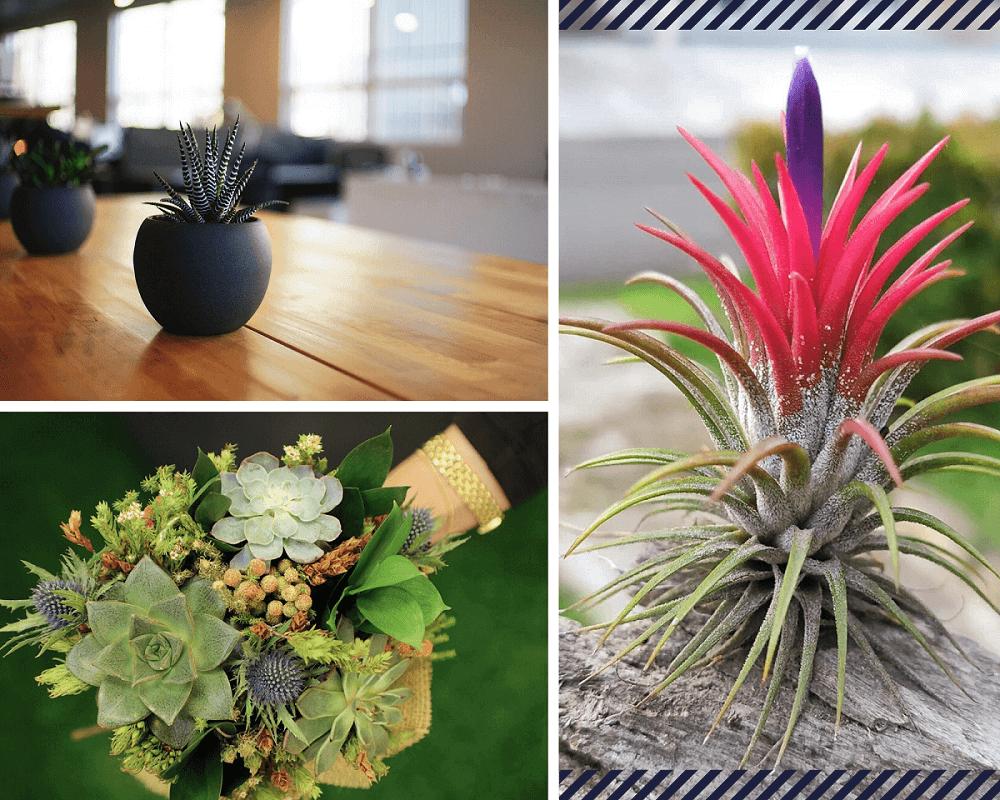 Mejores Plantas de interior pequeñas